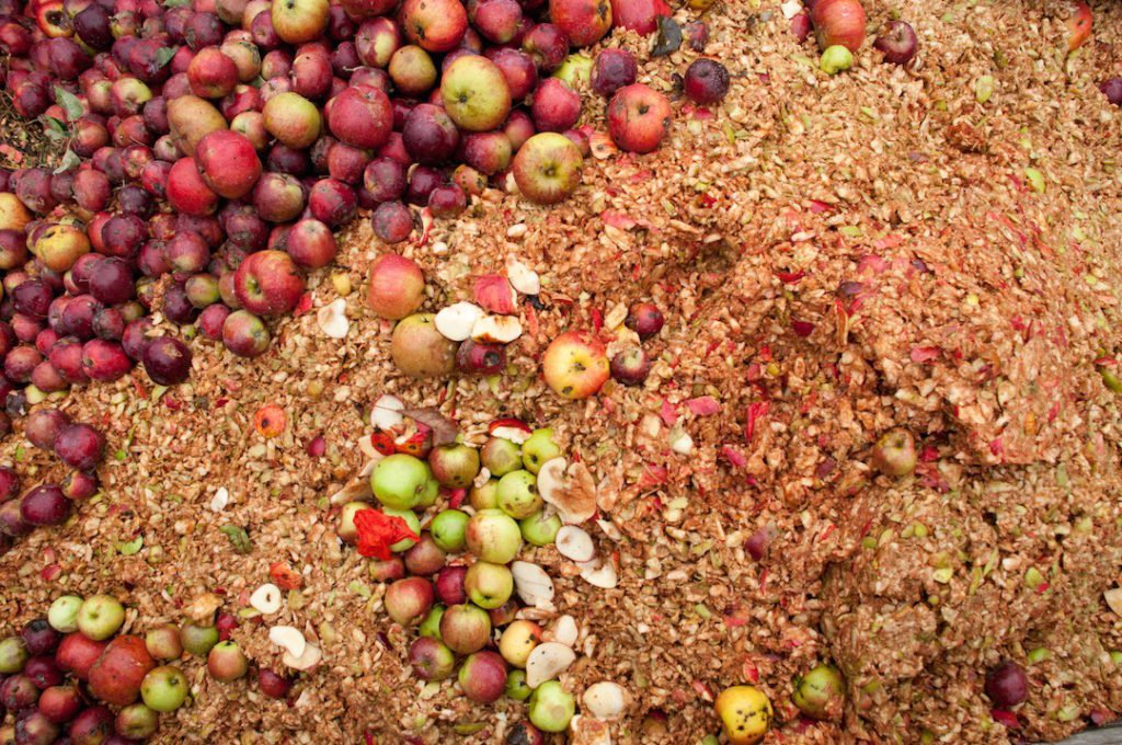 apples being mashed