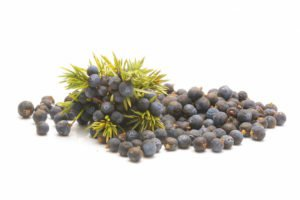 Juniper berries isolated on white