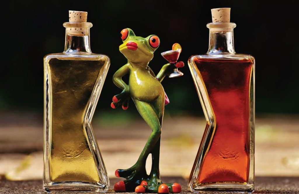 funny photo of a frog with 2 different alcohols