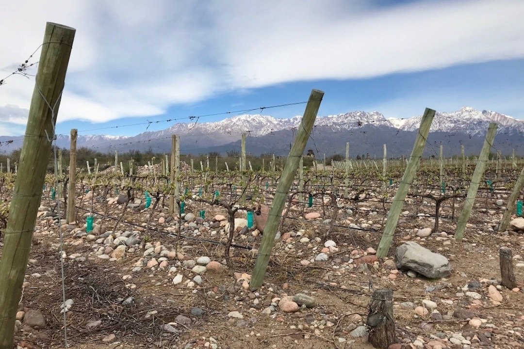 Close up of the rocky soil in vineyards in Uco Valley, Argentina