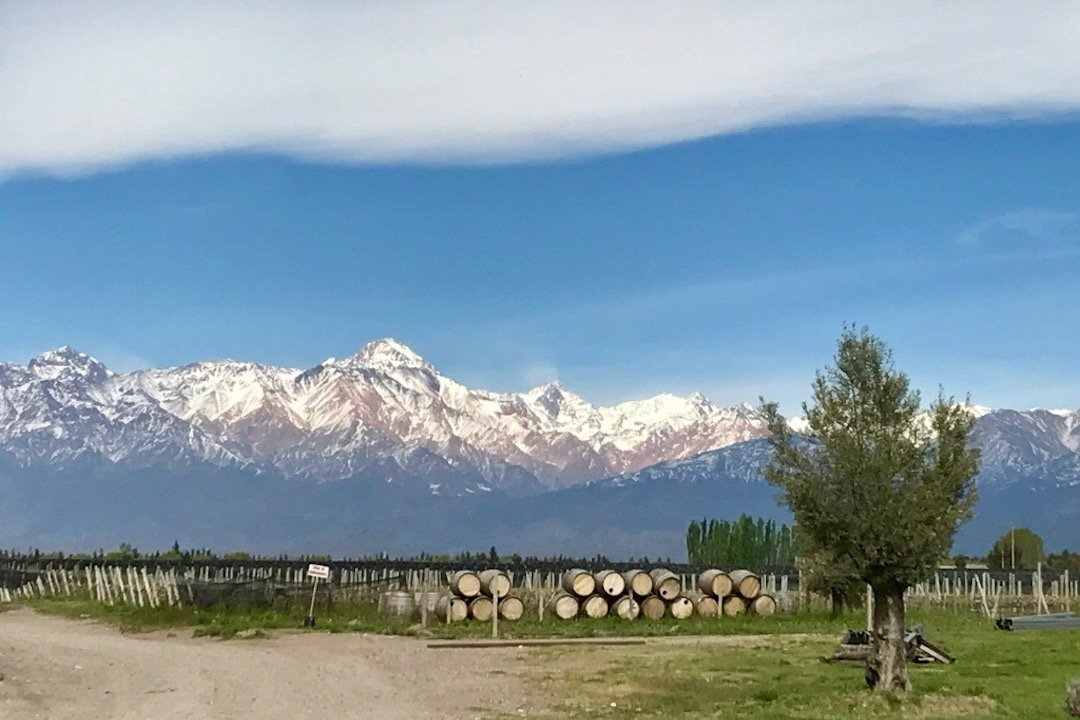 View of the snow-capped Andes behind vineyards and wine barrels in Uco Valley, Argentina