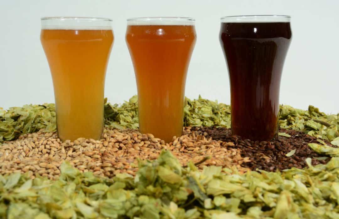 Different colored IPAs with hops and malted barely strewn around them