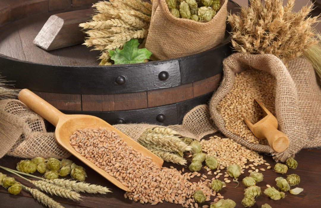 beer barrel with hops, wheat, grain, barley and malt