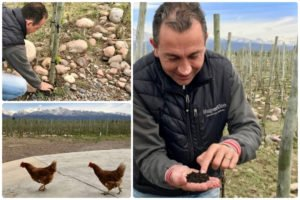 Collage of Gabriel showing us the soil and chickens at SuperUco