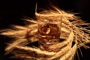Glass of whiskey and wheat ears on dark background