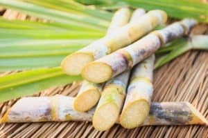 Close up of sugarcane