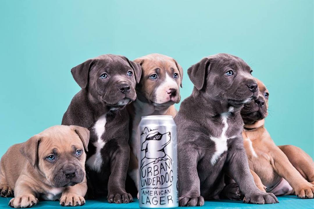 A can of Urban Underdog American Lager surrounded by adorable puppies