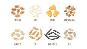Grain Seed Varieties