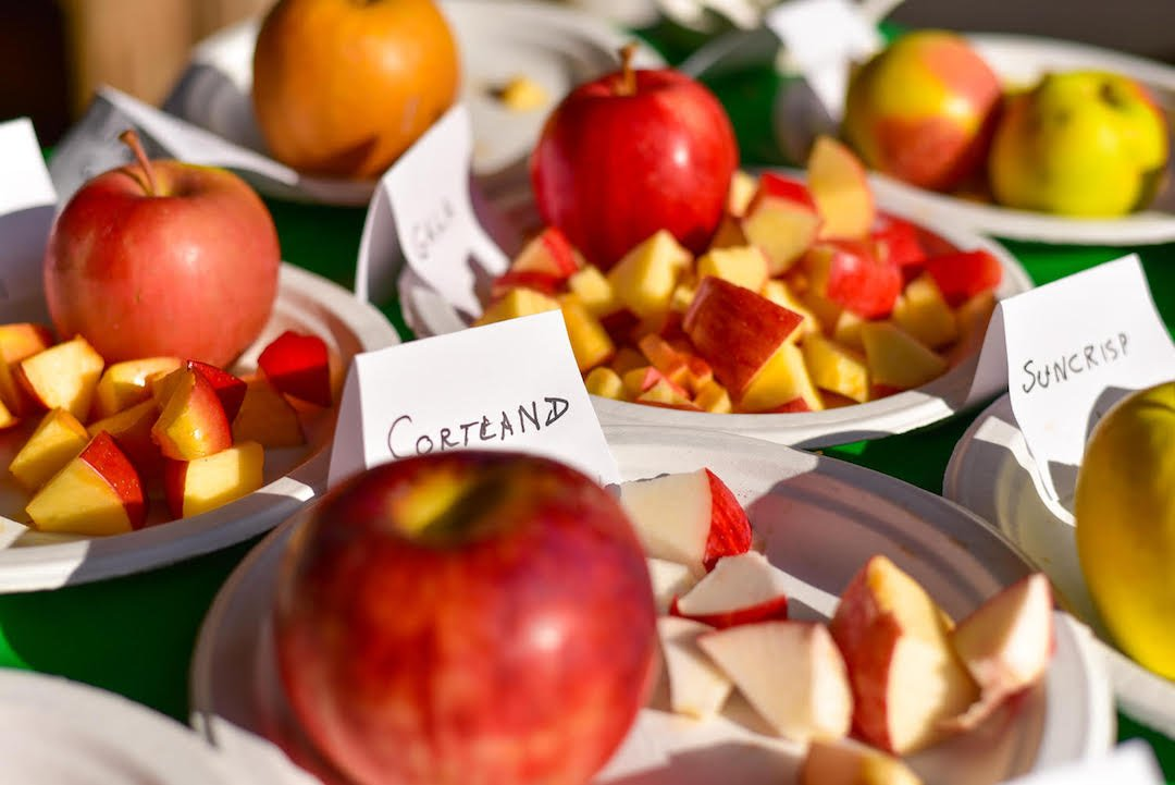 Close up of a table full of apples cut up and labeled for tasting
