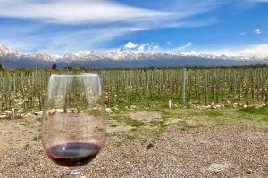 Mendoza Wine Region Wine
