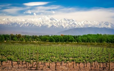 Argentinean Wine: Why Something So Delicious Took So Long To Reach The Masses
