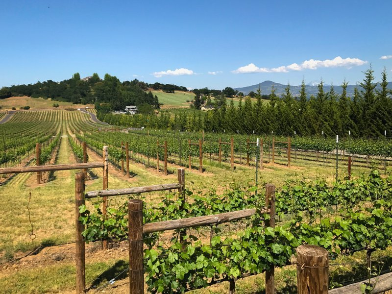 Sun shines 175 days a year in the Rogue Valley Wine Region