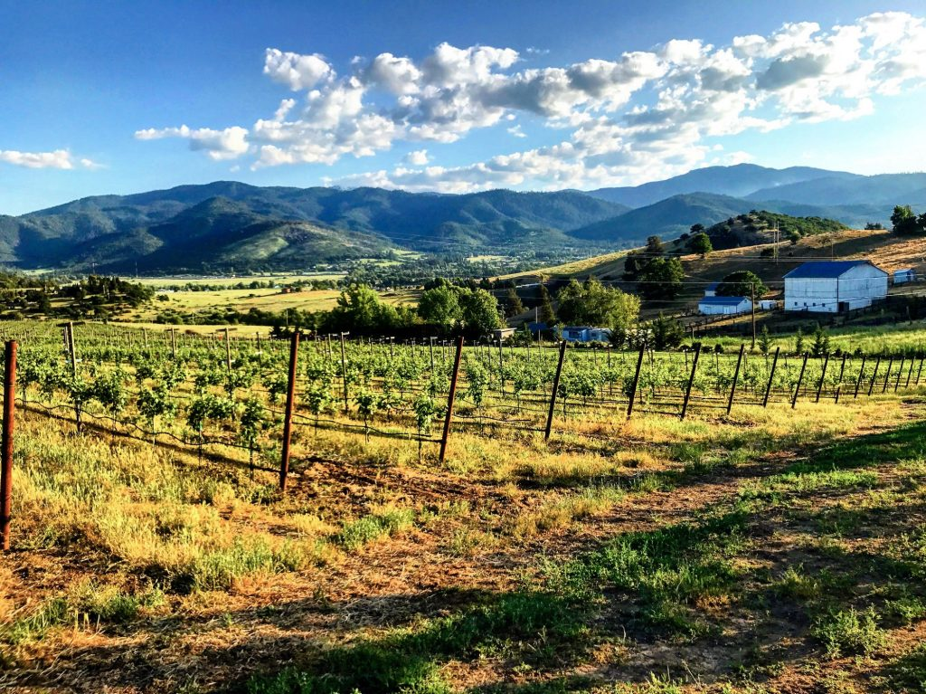 A Brief History of The Rogue Valley Wine Region