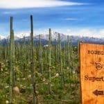 Bodega SuperUco…Truly Super In Every Sense