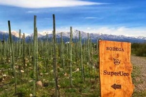 Best Mendoza Wineries: Bodega SuperUco