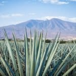 Magical, Misunderstood Mezcal